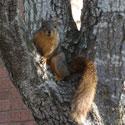 Animals theme: squirrel