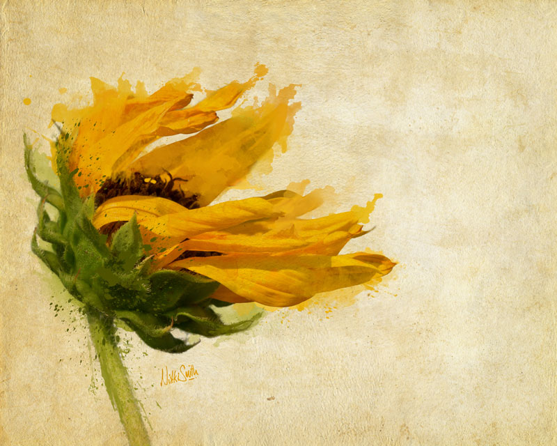 Sunflower Breezes, copyright Nikki Smith